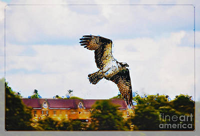 Village Osprey Art Print