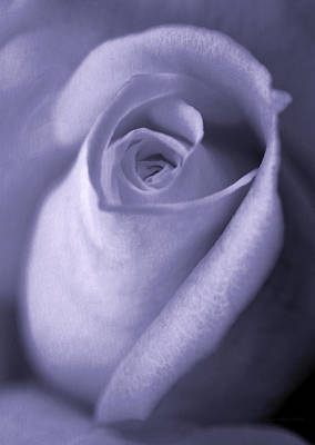 Photograph - Vinage Lavender Rose Bud Flower by Jennie Marie Schell