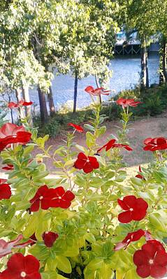 Photograph - Vinca Lakeview by Kenny Glover