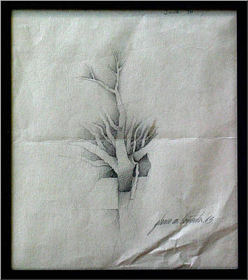 Drawing - Vine And Branches A 1969 by Glenn Bautista