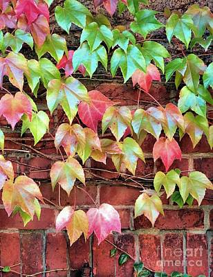 Photograph - Vine Covered Brick by Janice Drew