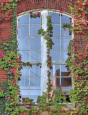 Photograph - Vine Covered Window by Janice Drew