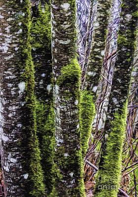 Photograph - Red Alder Trees Two by Jean OKeeffe Macro Abundance Art
