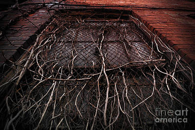Vine Of Decay 1 Art Print by Amy Cicconi