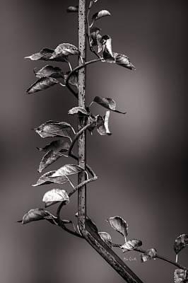 Vine On Iron Art Print by Bob Orsillo