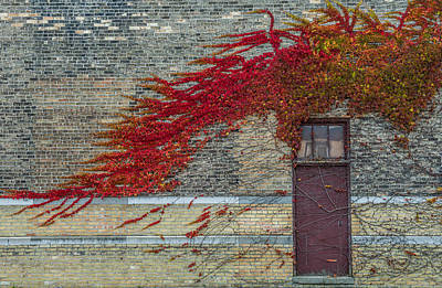 Overgrown Photograph - Vine Over Door by Paul Freidlund