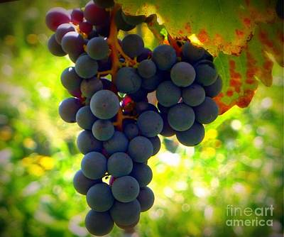 Photograph - Vine Purple Grapes  by Susan Garren