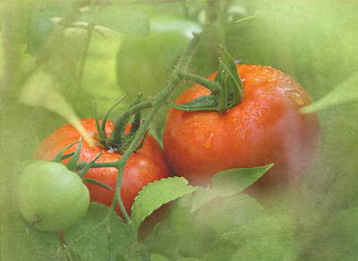 Tomato Photograph - Vine Ripened Tomatoes by Angie Vogel