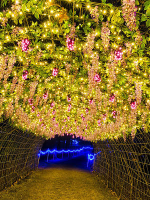 Photograph - Vine Tunnel by Daniel George