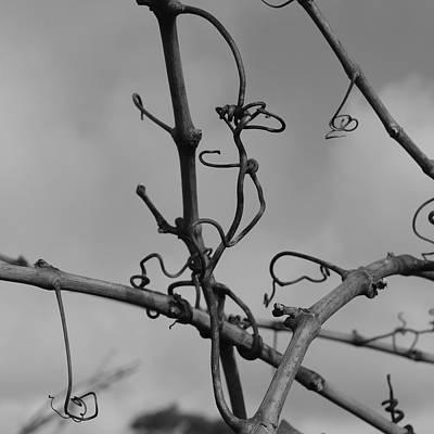 Photograph - Vineart B W . Vat 1.8 by Cheryl Miller