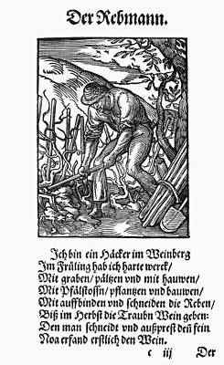 Grapevines Painting - Vinegrower, 1568 by Granger