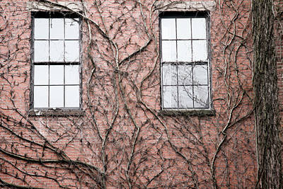 Photograph - Vines And Brick by Natalie Rotman Cote