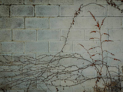 Photograph - Vines by Carl Engman