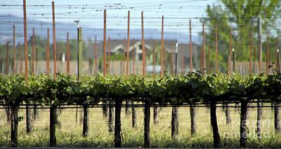 Vines Original by Leslie Reitman