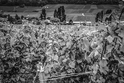 Vines Of France Original by Chris Smith