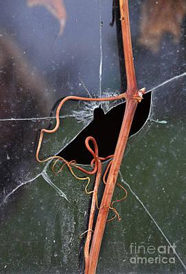 Photograph - Vines On Broken Window by Jill Battaglia