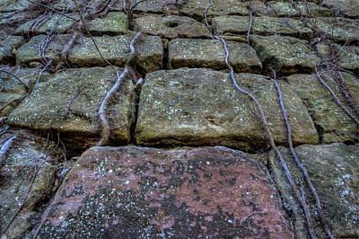 Cherry Coke Photograph - Vines On Stonework by David Dufresne
