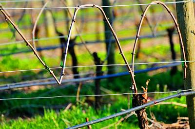 Jerry Sodorff Royalty-Free and Rights-Managed Images - Vines on Wire 22637 by Jerry Sodorff