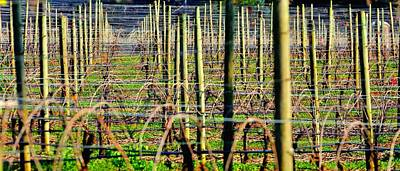 Jerry Sodorff Royalty-Free and Rights-Managed Images - Vines Poles 22649 by Jerry Sodorff