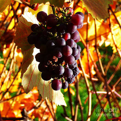 Photograph - Vineyard 19 by Xueling Zou