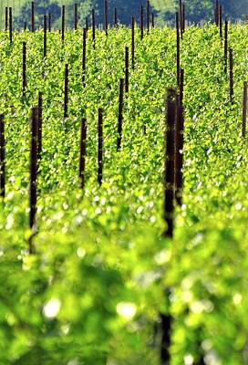 Jerry Sodorff Royalty-Free and Rights-Managed Images - Vineyard 24056 by Jerry Sodorff