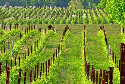 Photograph - Vineyard 24068 by Jerry Sodorff