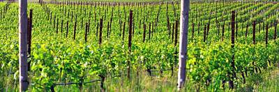 Photograph - Vineyard 24077 3 by Jerry Sodorff