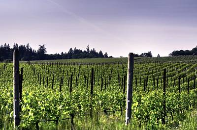 Photograph - Vineyard 24077 by Jerry Sodorff