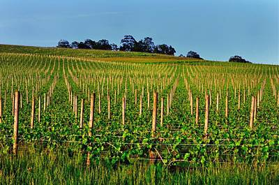 Photograph - Vineyard 24125 by Jerry Sodorff