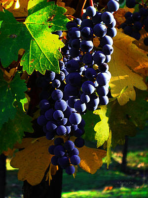 Wine Photograph - Vineyard 28 by Xueling Zou