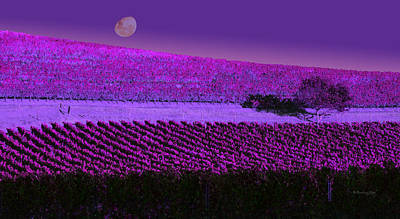 Photograph - Vineyard 40 by Xueling Zou