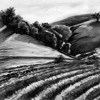 California Vineyard Painting - Vineyard by Allison Rogers
