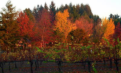 Photograph - Vineyard And Autumn Trees by Jeff Lowe
