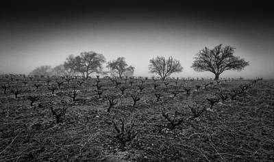 Photograph - Vineyard And Oak Trees by Roger Mullenhour