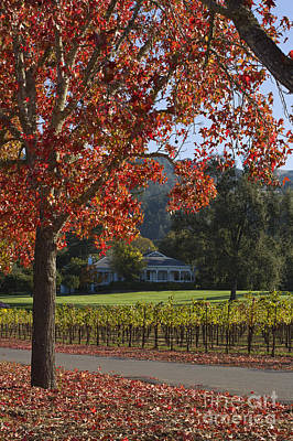 Photograph - Vineyard And Red Trees Napa by Craig Lovell