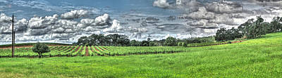 Photograph - Vineyard And Rolling Hill Pano by SC Heffner