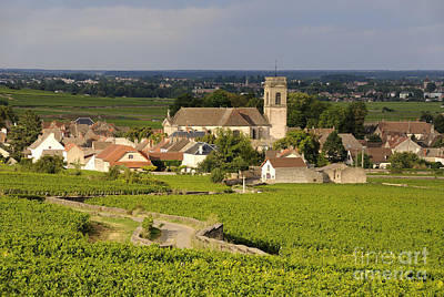 Vineyard And Village Of Pommard. Cote D'or. Route Des Grands Crus. Burgundy. France. Europe Art Print by Bernard Jaubert