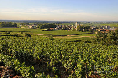 Grapevines Photograph - Vineyard And Village Of Pommard. Cote D'or. Route Des Grands Crus. Burgundy.france. Europe by Bernard Jaubert