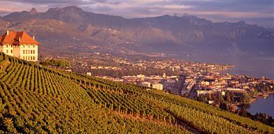Winemaking Photograph - Vineyard At A Hillside, Lake Geneva by Panoramic Images