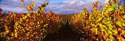 Vineyard At Napa Valley, California, Usa Art Print by Panoramic Images