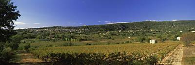 Vineyard At Saint-saturnin-les-apt Art Print by Panoramic Images