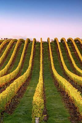 Photograph - Vineyard At Sunrise, Marlborough, New by Matteo Colombo