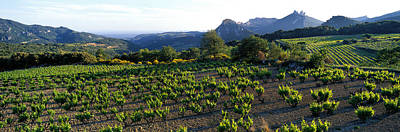 Grapevines Photograph - Vineyard Dentelles De Montmirail by Panoramic Images