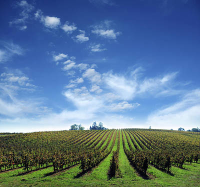 Photograph - Vineyard Farm With Clouds Background - by Phototalk