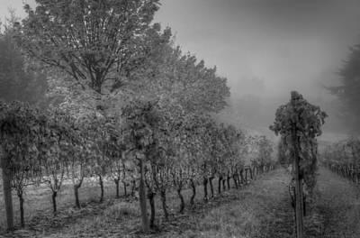 Vineyard Fog Art Print by Jean Noren