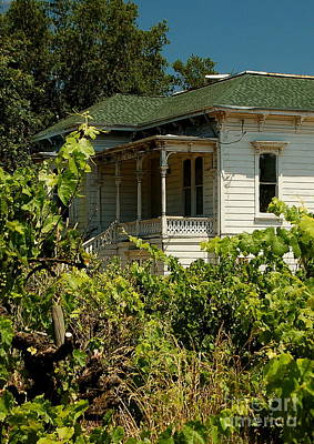 Photograph - Vineyard Homestead by Tamyra Crossley