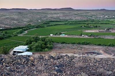 Vineyard In Arid Terrain Art Print by Tony Camacho