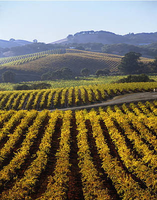 Photograph - 6b6387-vineyard In Autumn V by Ed  Cooper Photography