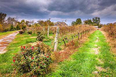 Vineyard In Fall Art Print by Alexey Stiop