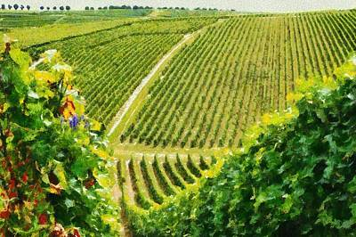 Photograph - Vineyard In France by Mick Flynn